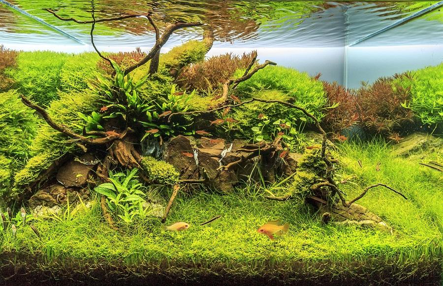 Jungle Abyss – hồ 60 với hậu cảnh tương phản