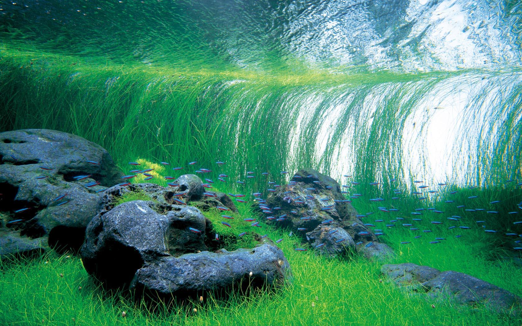 Bố cục và cây trồng trong một bể thủy sinh