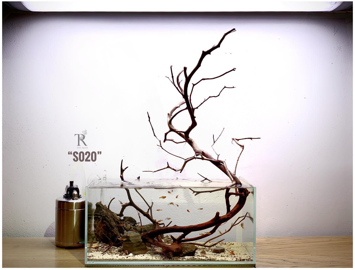 Từ Thái Sơn – Chia sẻ cơ bản về Thủy sinh tối giản – phần II