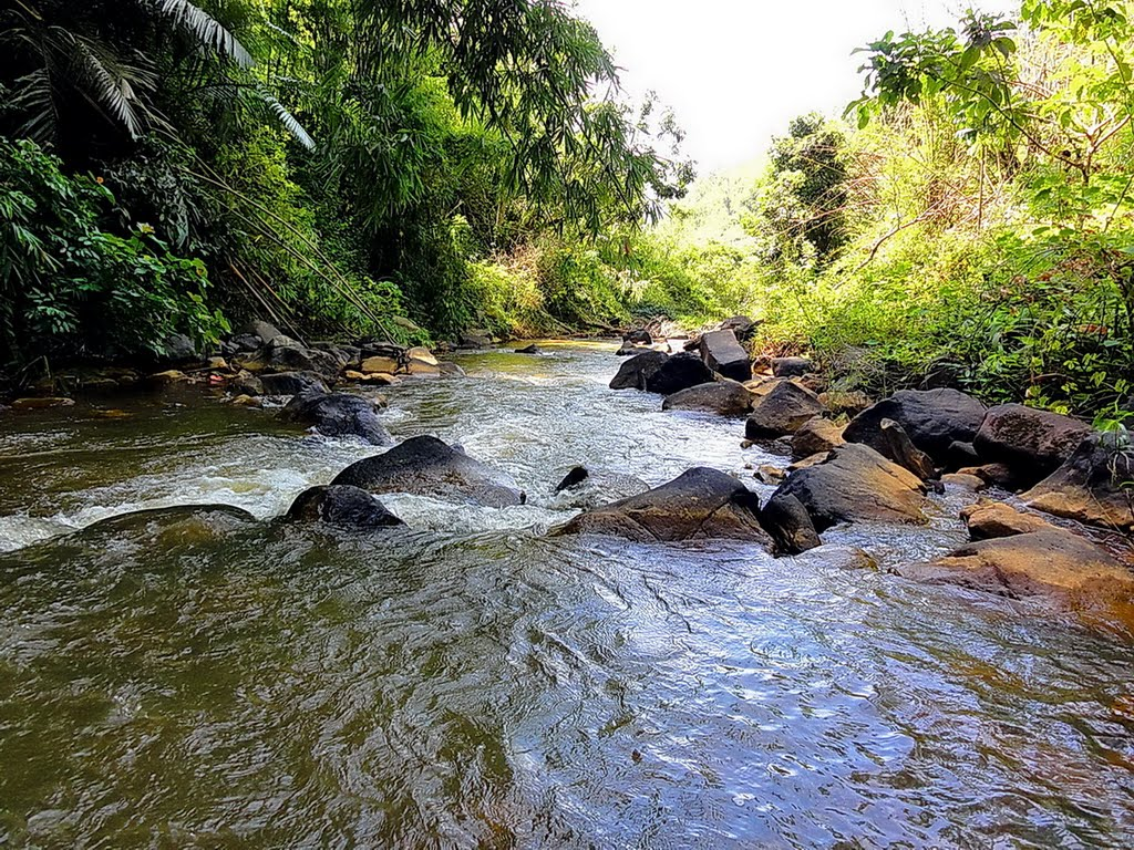 Cảm hứng cho bố cục sông suối đến từ thiên nhiên