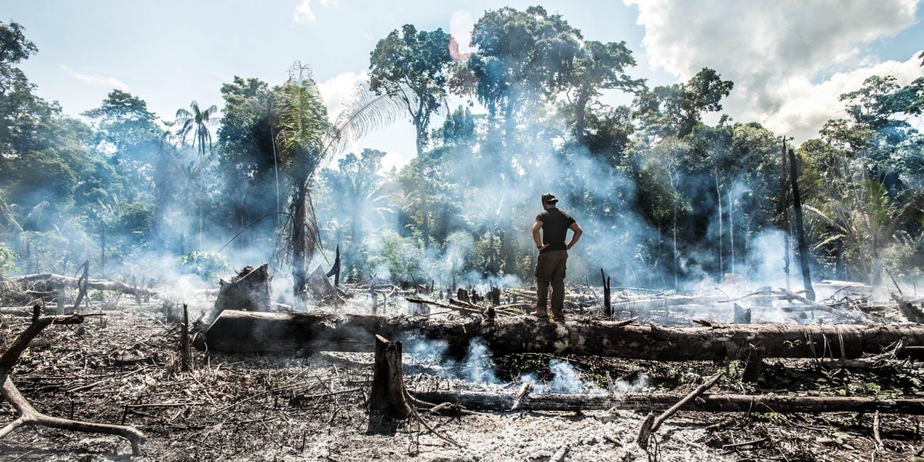 Cháy rừng Amazon, thảm họa được báo trước