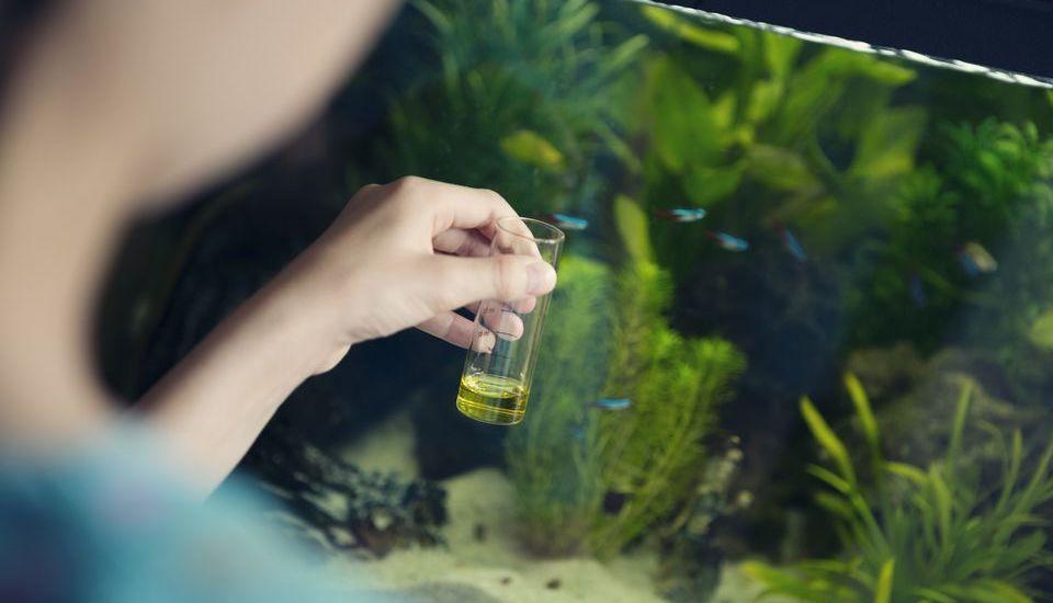 5 lưu ý khi sử dụng phân nước thủy sinh